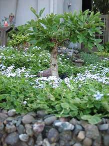 Contributor's Garden mm