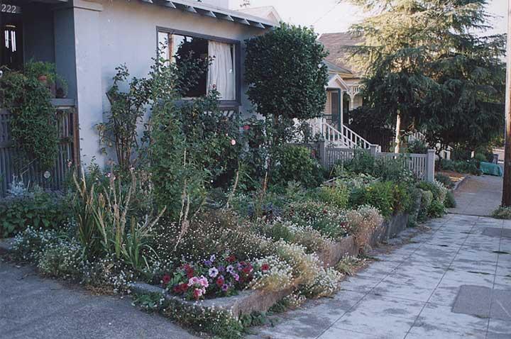 Contributor's Garden A